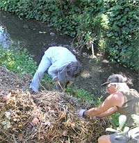 Friends of Five Creeks, Invasive Weeds Week 2005