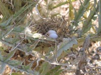Bird nest in artichoke thistle