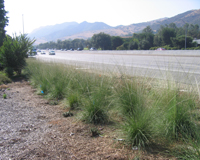 Roadside revegetation