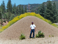 Gravel pile with invasive plants