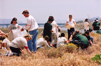 Weed working volunteers make a difference in California!