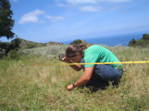 Monitoring plants on Catalina Island. Photo by John Knapp