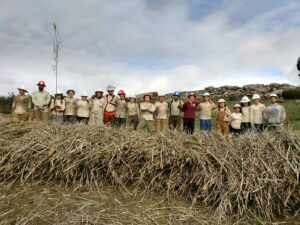 ACE restoration crew standing tall and proud with a pile of cut Arundo by Julia Parish