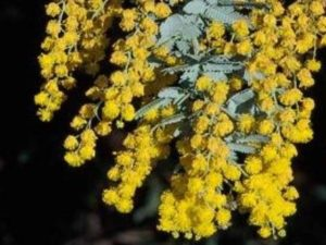 Plants A To Z California Invasive Plant Council