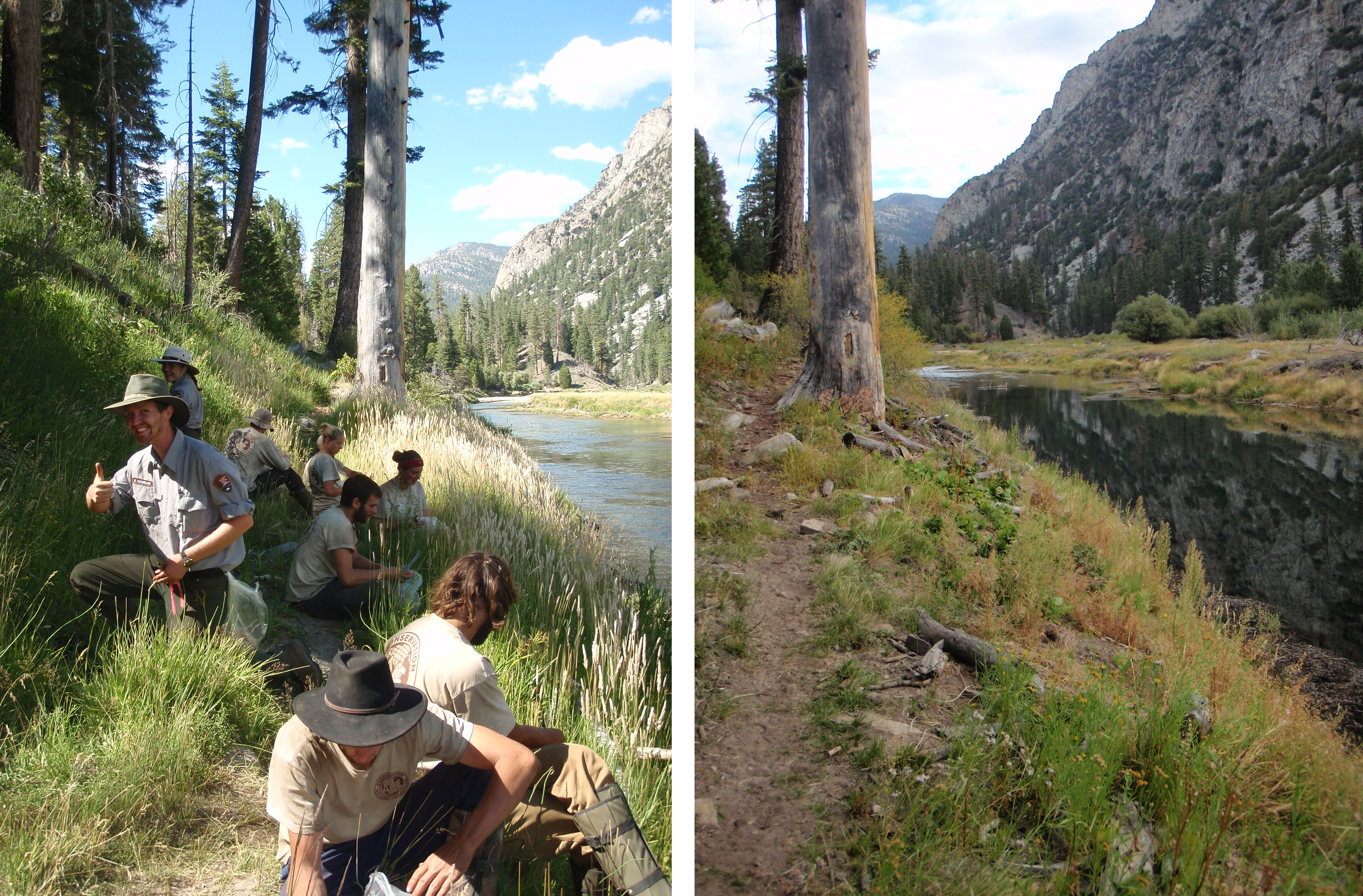 Before and After treatment of velvetgrass (Holcus lanatus) along Kern River, Golden Trout Wilderness. Photo: Rich Thiel