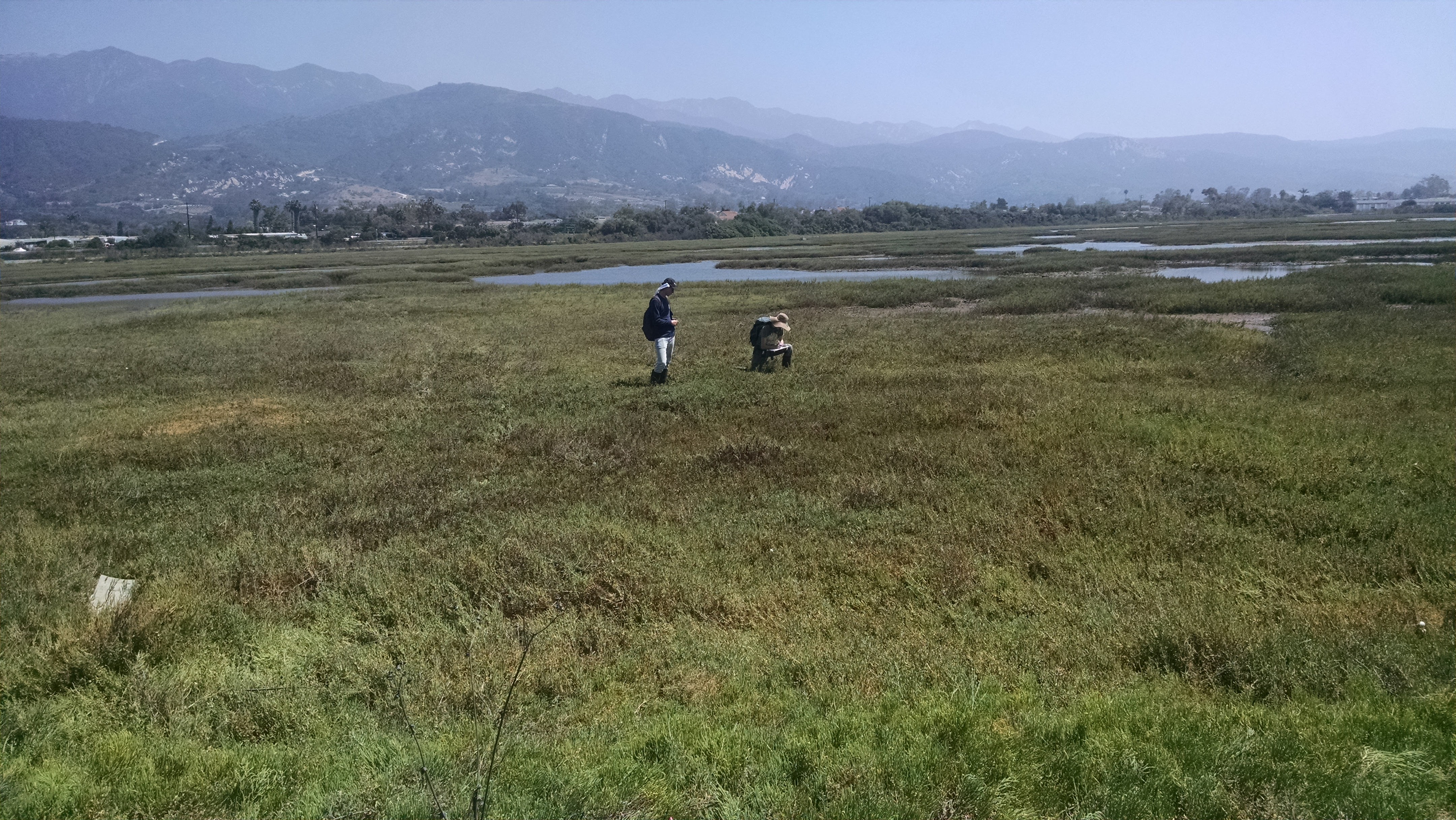 Field technicians stop to record data during Carpinteria Salt Marsh CHMA Surveys