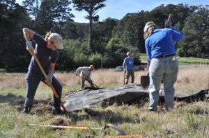 Volunteer workday tarping weeds in the Presidio