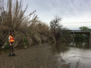 Jason Giessow, DENDRA Inc., collecting cane density information for an Arundo infestation on a Tehama County waterway in the Central Valley: Photo Dana Morawitz