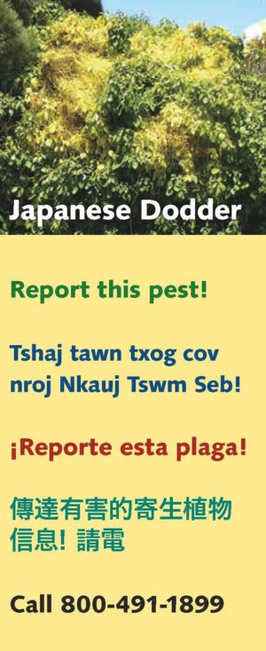 Japanese Dodder Brochure cover