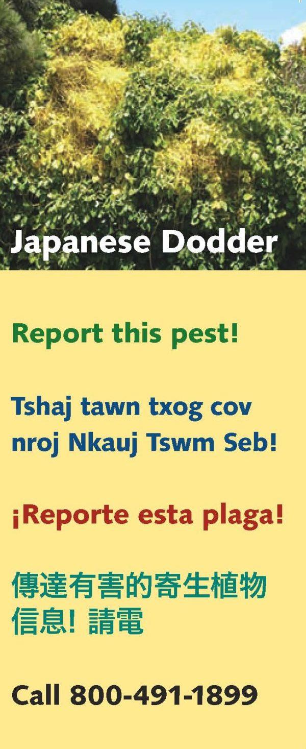 Japanese Dodder Brochure cover