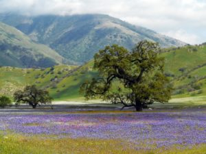 California Biodiversity Action Plan