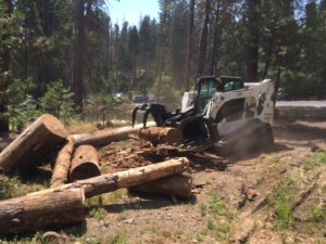 Tree_mortality_Sierra_moving logs_Kevin_Wright