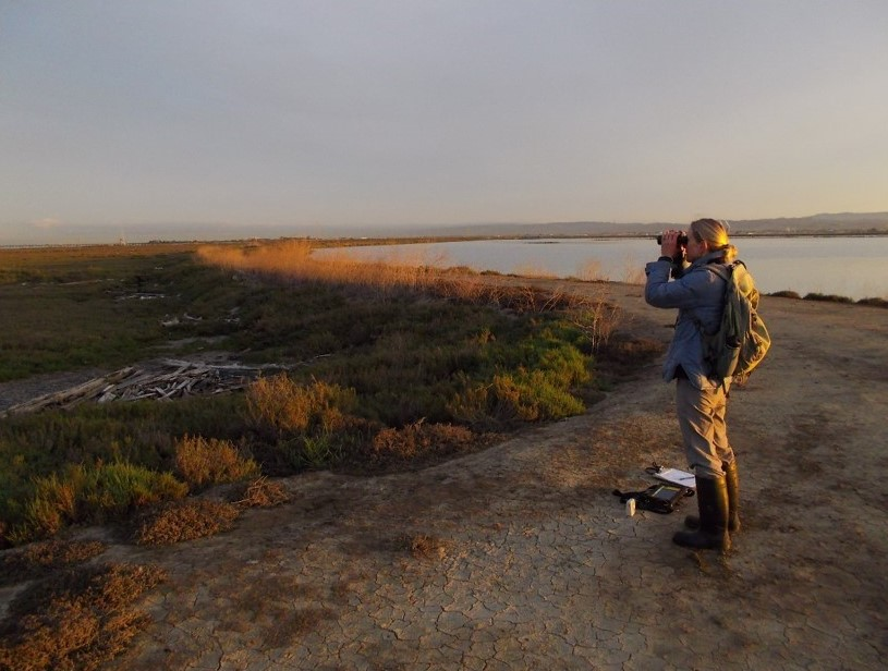woman scientist with binoculars looks out over a marsh with Spartina plants