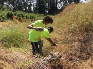 Two young men pull weeds from a brush-covered hillside