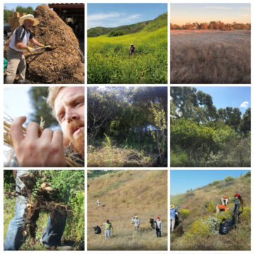 Composite image of 9 squares featuring people pulling weeds in construction gear or examining weeds closely or looking onto landscape of weeds
