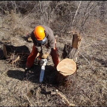 A person in protective gear leans over to cut a stump with a chainsaw