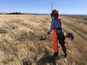 A woman in reflective work gear and helmet uses a string trimmer to control yellow star thistle